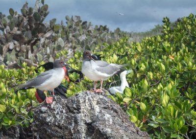 Islas-Galapagos-3